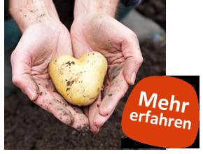 Zwei Hände halten eine herzförmige Kartoffel